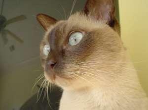 猫咪不吃饭 改善挑食坏习惯
